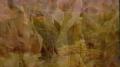 Beautiful Shenandoah Music video
