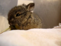 Cute Bunny Eats a Flower and Cleans Face