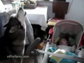 Dog Sings to Make Baby Stop Crying