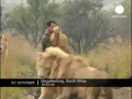 Lions Loved to be Hugged!