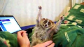 Some animals like to be tickled.