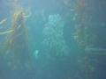 Monterey Bay Aquarium filedtrip 2009