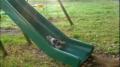 Kittens vs. Slide