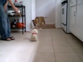 Dogs Fear Imposter Dog