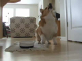 Dog Will Dance For Food