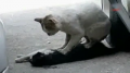 Cat Tries to Revive Girlfriend