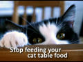 A Kitten Care Video on Solutions for Kittens Eating Trash