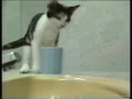 an old video of funny cats but it always make me laugh