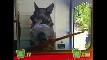 Canadian Mailman