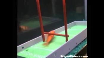 Tired of Boring Fish? Train Them!