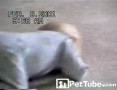 Cutest Wrestling Match Ever - PetTube.com