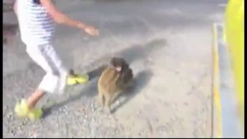 Baby Monkey Riding Backwards on a Pig