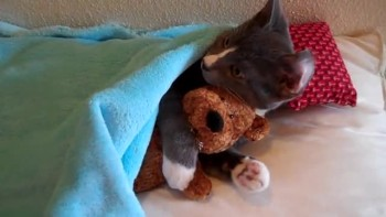 Cute Kitten Hugs Teddy