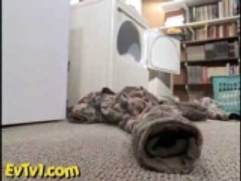 Pet Otters - Ferrets on Crack