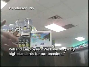 Petland Investigation: Pet Store Sells Puppy Mill Dogs
