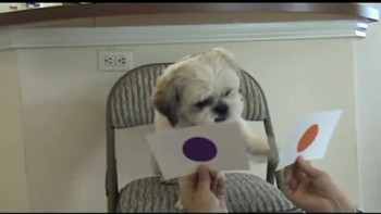 Sonny the Wonder Dog learns his colors
