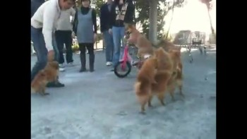 Doggy Congo Line