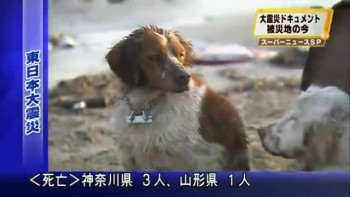 Japanese Dog Won't Leave Friend After Quake