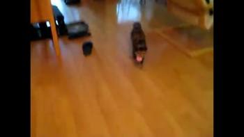 Kitten Fetches