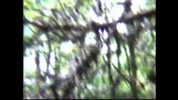 Danielson - Headz In The Cloudz