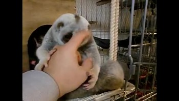 SO CUTE - Loris Licks