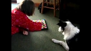 Collie playing board game