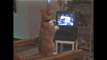 Violence on TV influences cat!!!