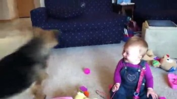 Baby Laughs at Dog Popping Bubbles