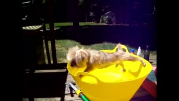 Cute Puppy DOES NOT Want a Bath - So Funny!