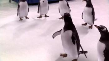 Dr. Baehr Interviews Mr. Popper's Penguins