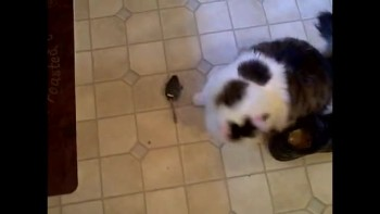 Cat & Mouse Video 2
