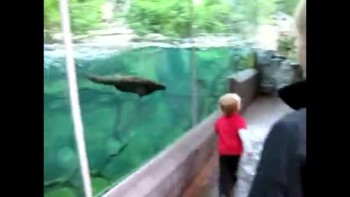 Boy Plays with Otter at the Zoo