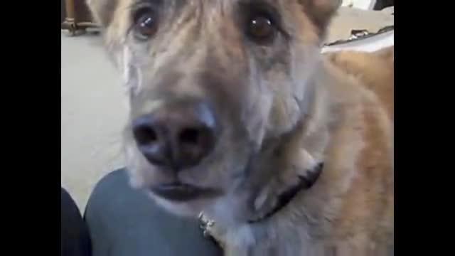 talking dog bacon