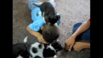 cute gangster christian puppies