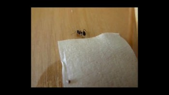 Consider An Ant's Ways