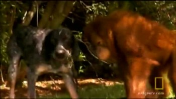 Orangutan & Dog are Best Friends