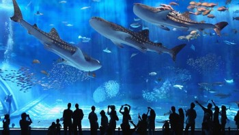 Second Largest Aquarium in the World
