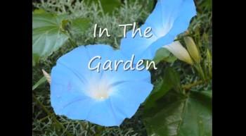 """""""In The Garden"""" by Joe"""