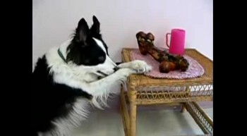 Dog Says Prayers Before Meal