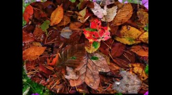 "Fall Foliage Pictures ""In the Garden"""