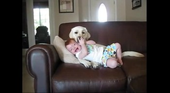 Cute dog grooms cute baby!