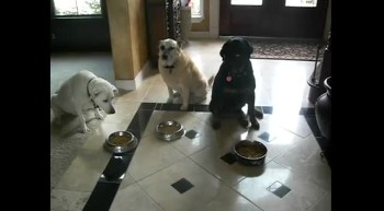 Adorable Dogs Pray Before Meal