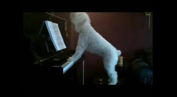 Adorable Dog Plays Piano  Sings!