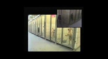 A Canine Lullaby quickly calms 50 barking dogs in shelter