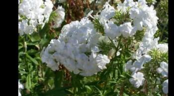 Thank You God For Spring-Original Poetry