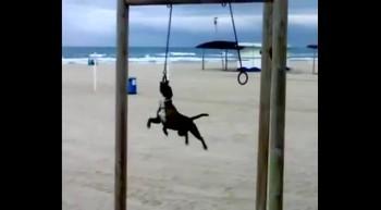 Dog is a good gymnast