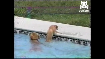 Amazing Dog Lifeguard Rescues Puppy