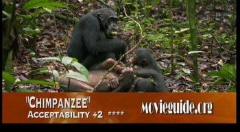 CHIMPANZEE review