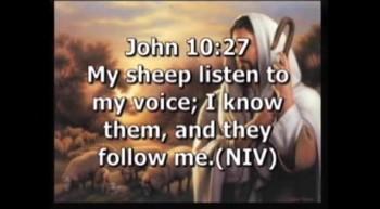 As Sheep, We Need A Shepherd