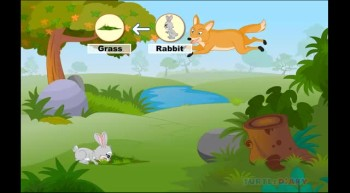 Learn all about Food Chain at www.turtlediary.com